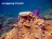 Paket Wisata Pulau Pari 2 Hari 1 Malam indonesia