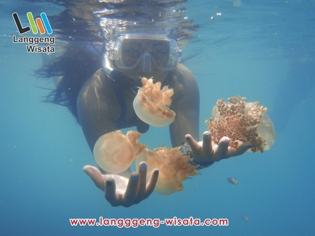 open trip derawan indonesia indah